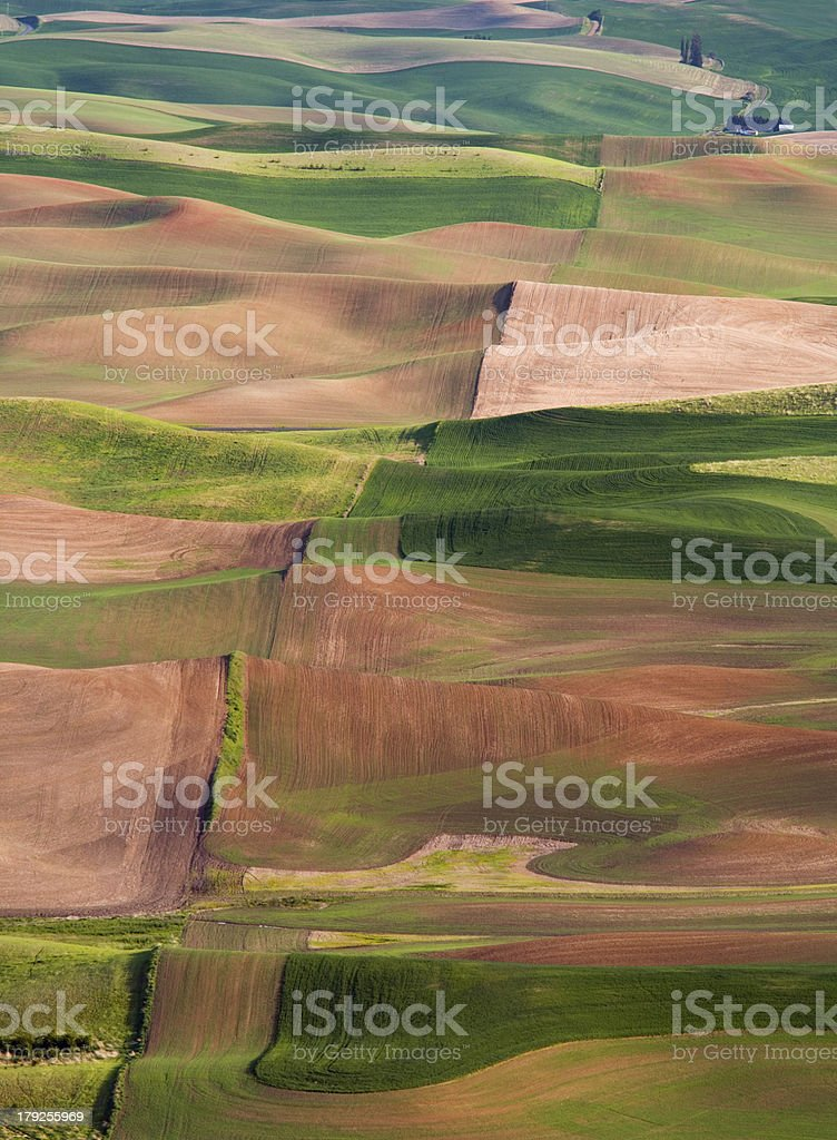 Palouse Hills at sunset from Steptoe Butte National Monument stock photo
