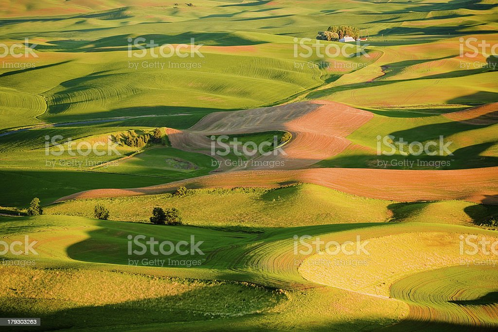 Palouse Hills with Golden Light at Sunset stock photo