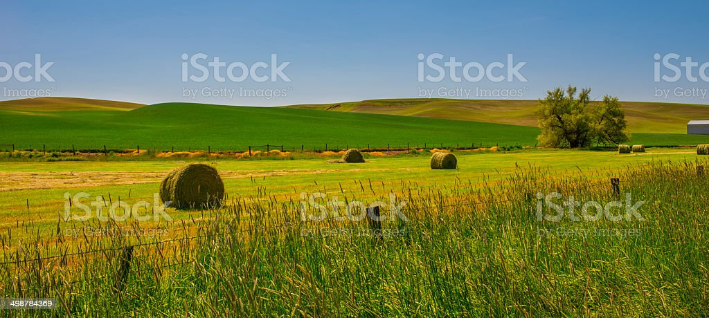 Palouse in Spring stock photo