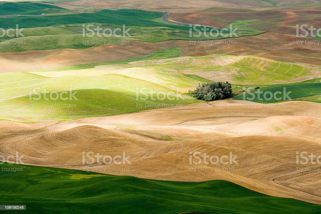 Palouse Landscape royalty-free stock photo