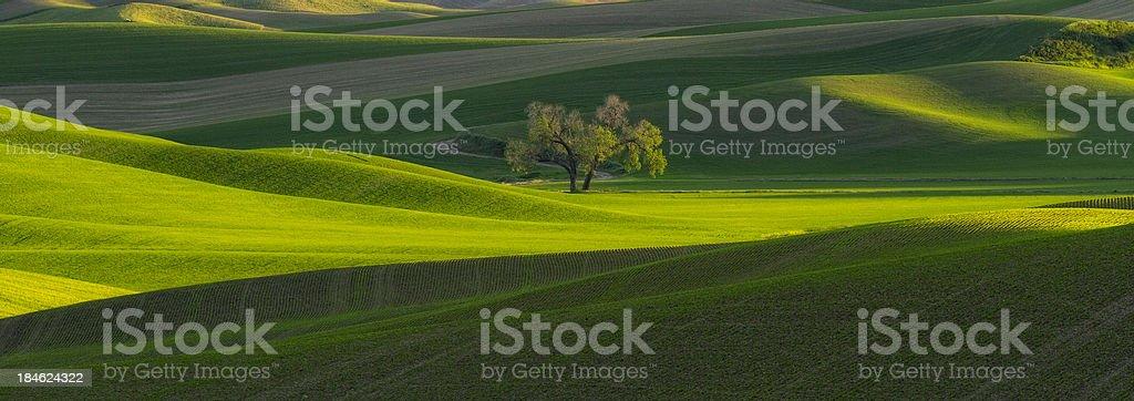 Palouse Lone Tree Panorama stock photo