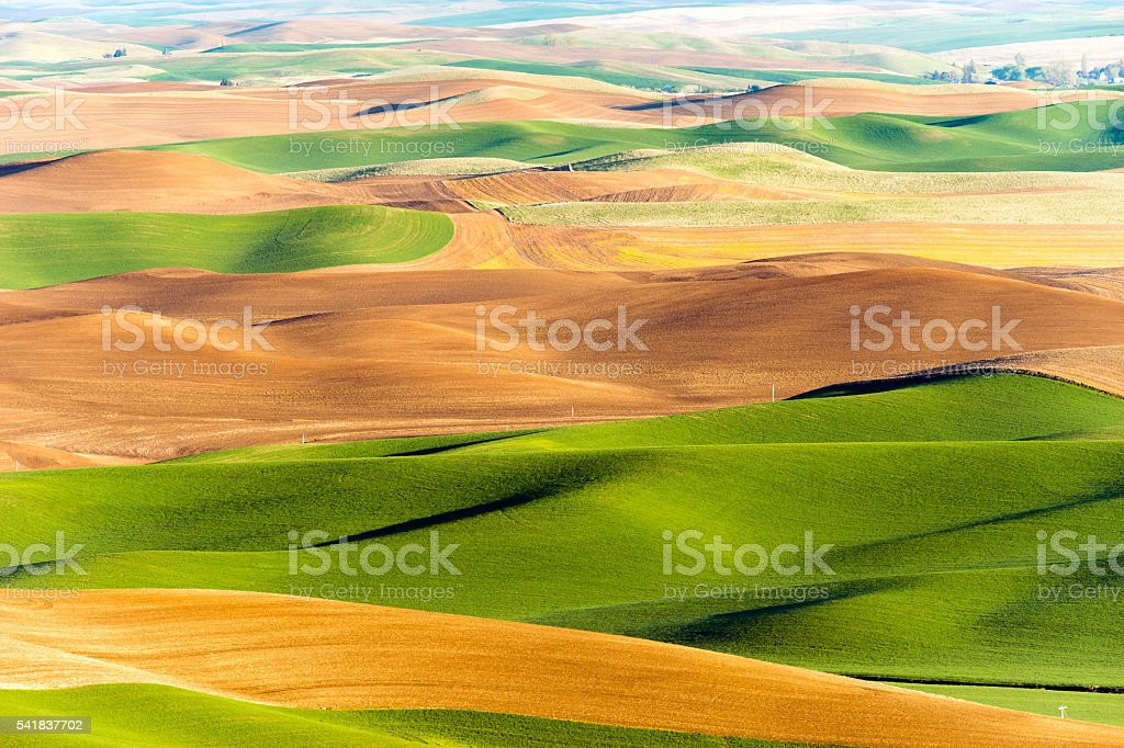Palouse Region Steptoe Butte Farmland Rolling Hills Agriculture stock photo