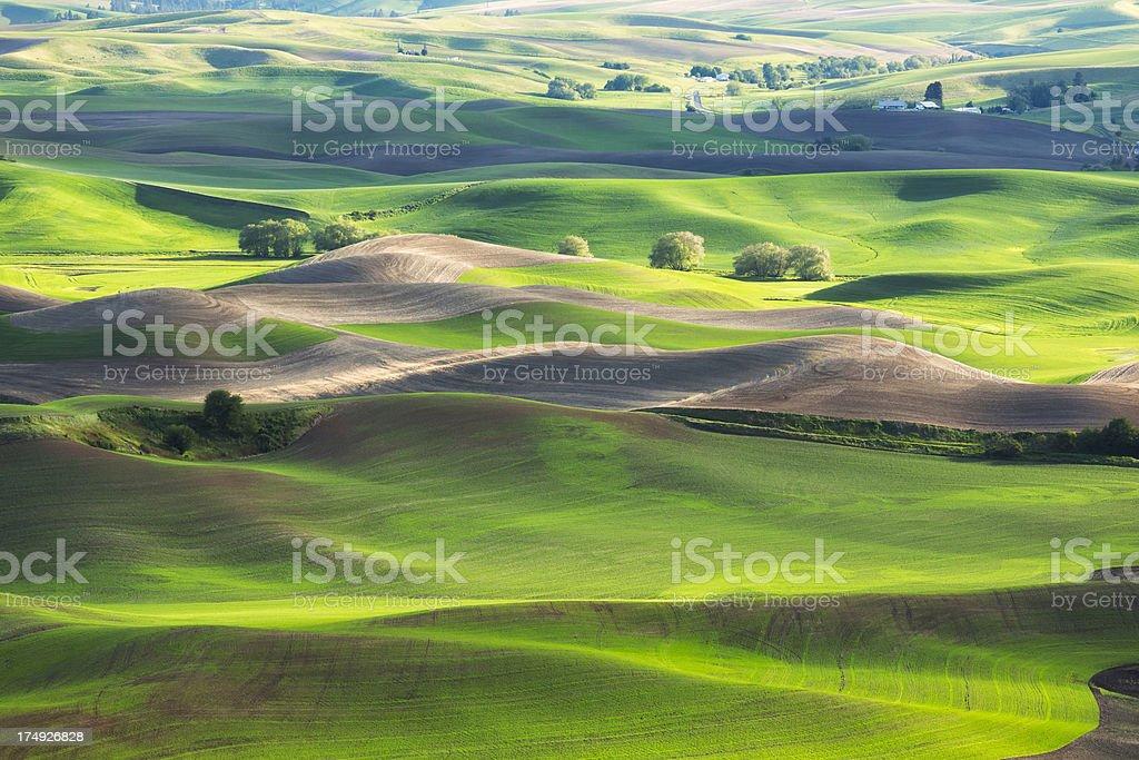Palouse Rolling Hills stock photo