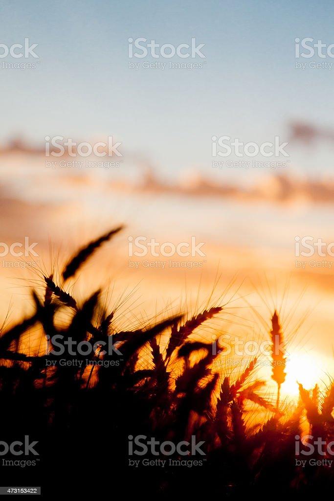 Palouse Silhouette stock photo