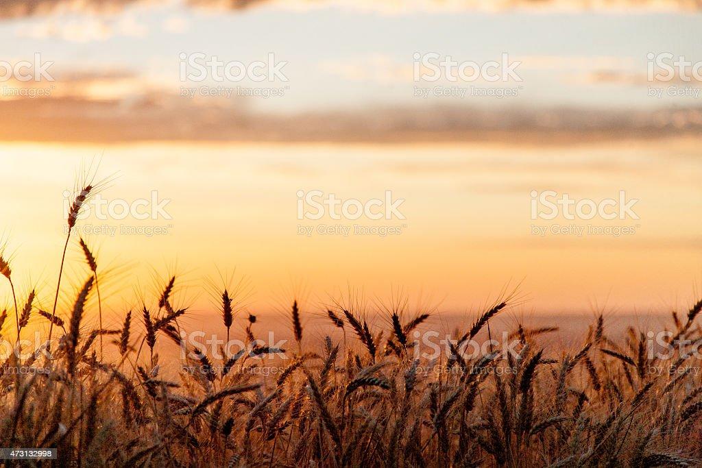 Palouse Skys stock photo