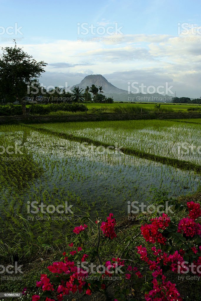 pampanga volcano and rice paddies philippines stock photo