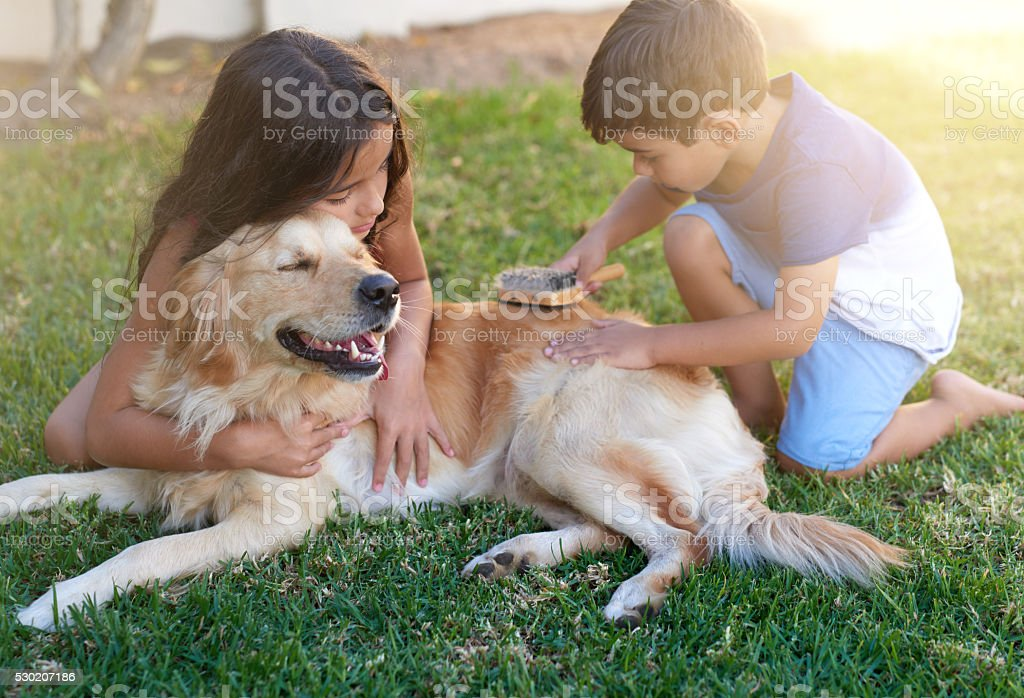Pamper time for their pooch stock photo
