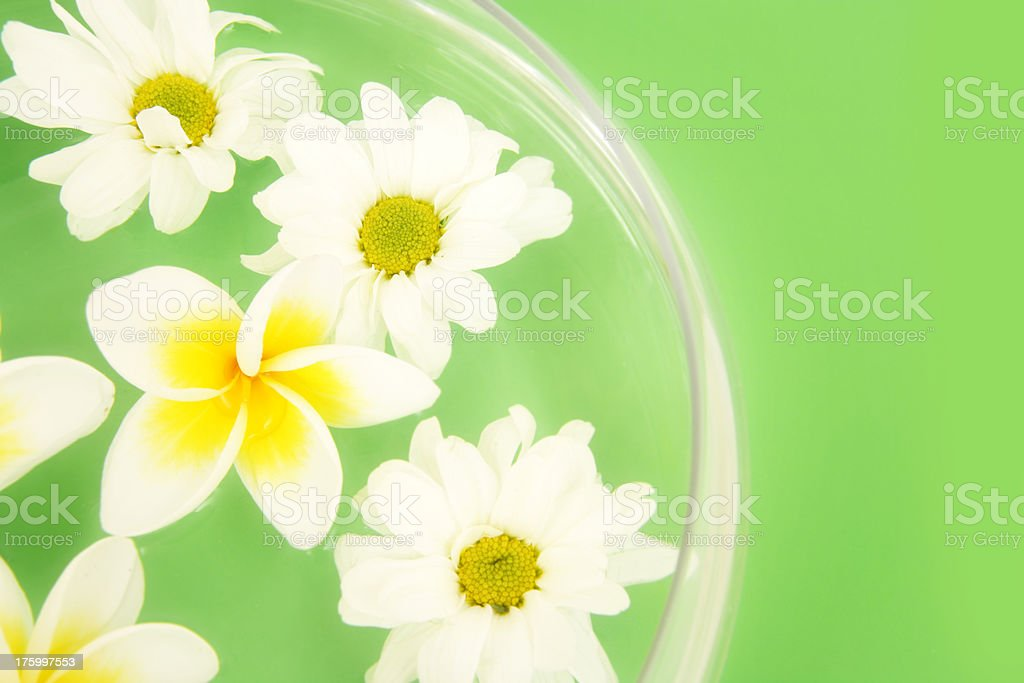 Pampered Flora royalty-free stock photo