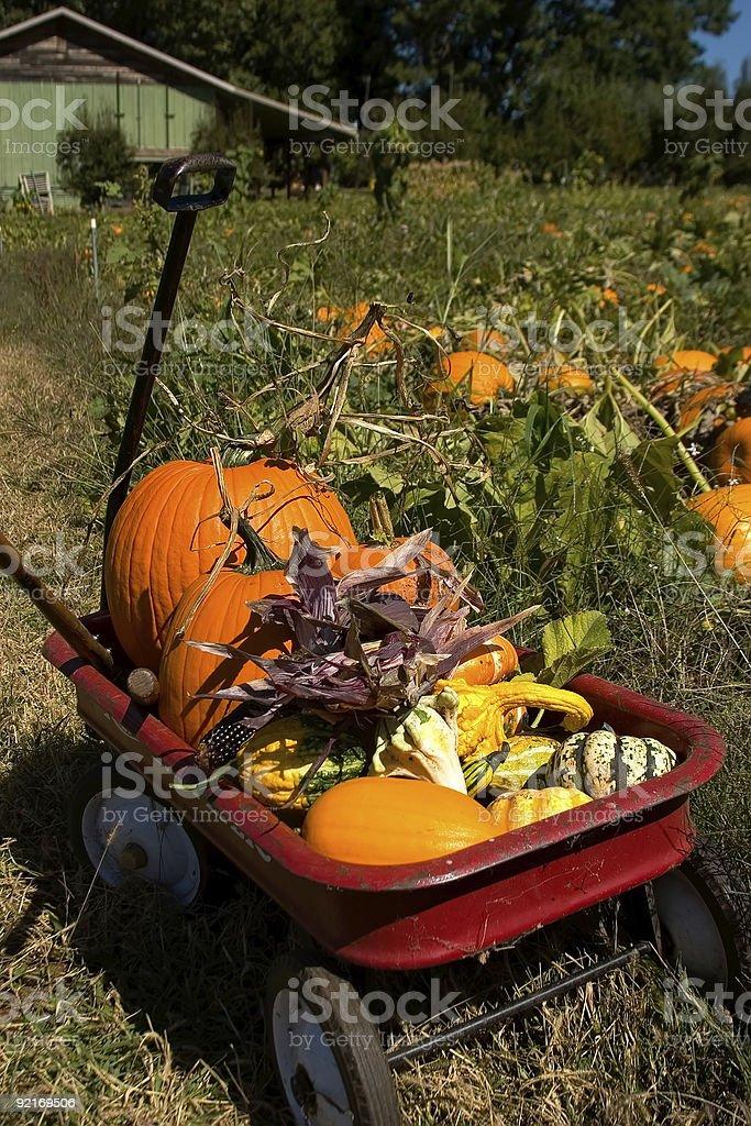 Pampkin patch stock photo