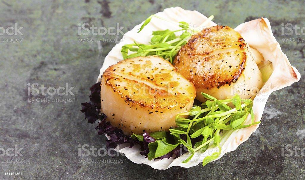 Pan Seared Scallops on a Half Shell stock photo