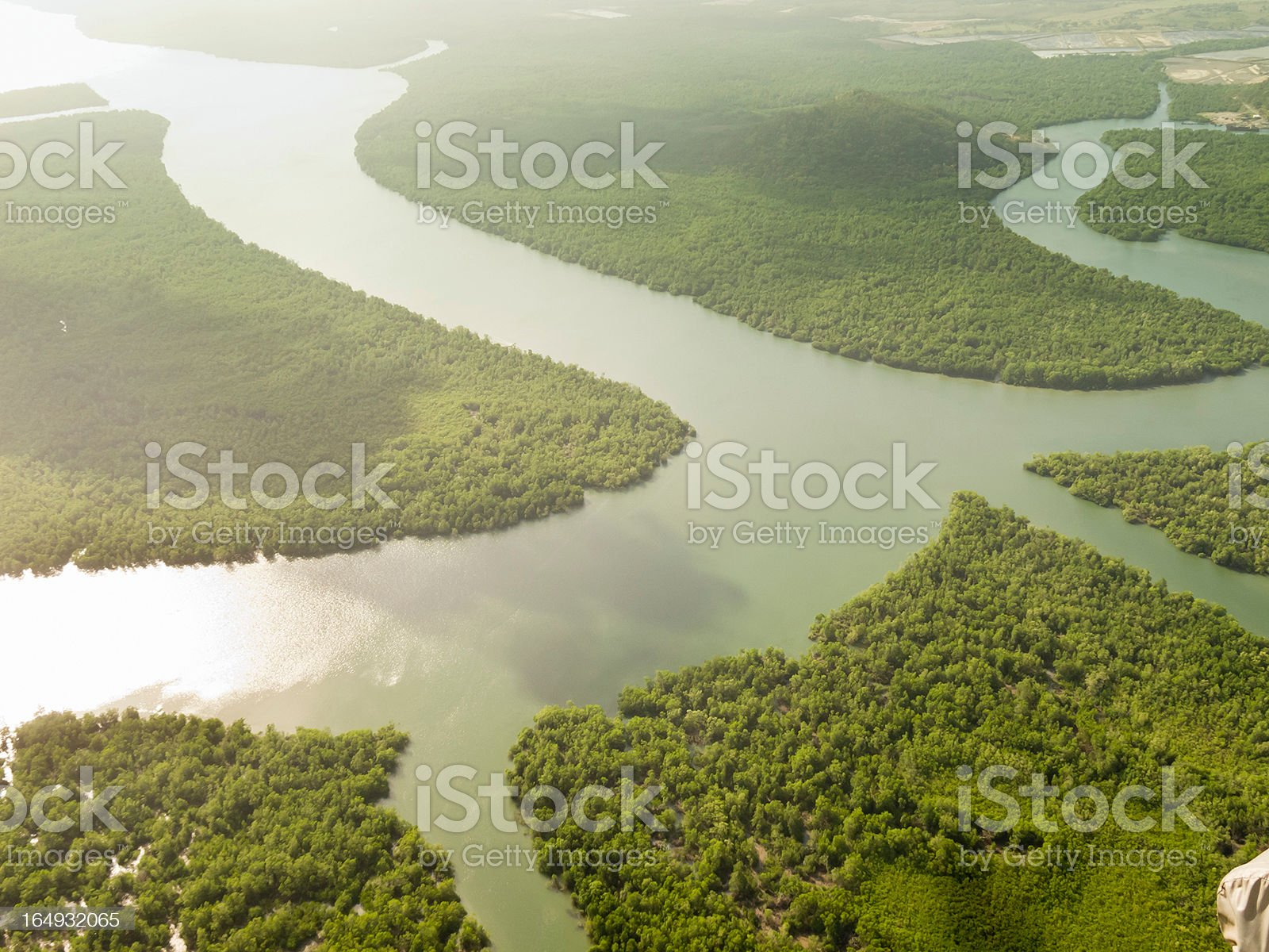 Panama´s RainForest royalty-free stock photo