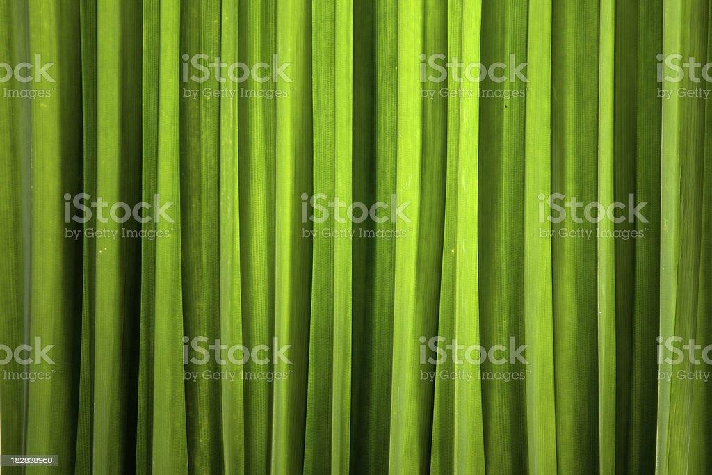 pandan leaves stock photo