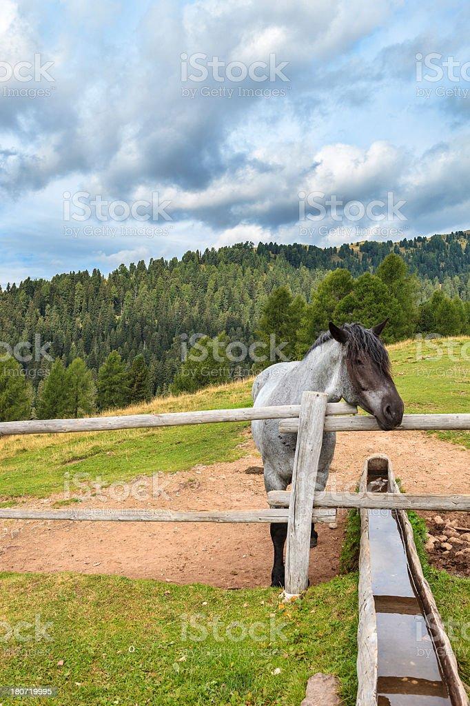 Paneveggio Forest, Trentino-Alto Adige, Italy royalty-free stock photo