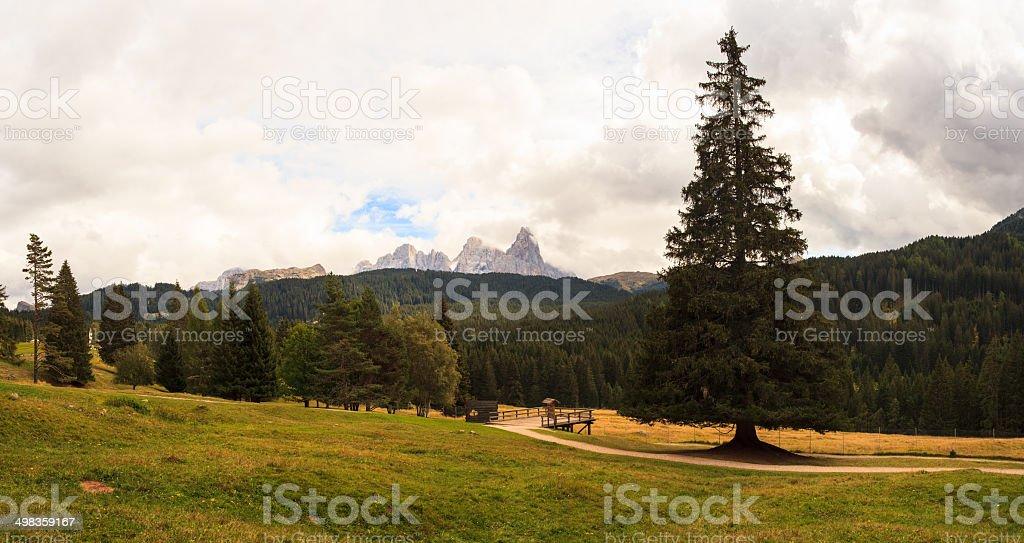Paneveggio park stock photo