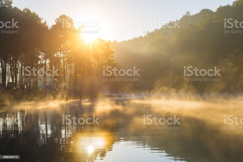 Pang ung park and Morning in forest stock photo