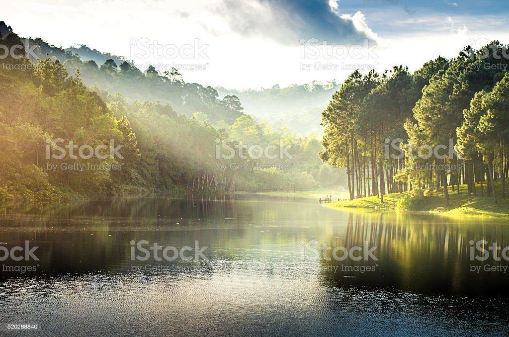 pang ung , reflection of pine tree in a lake stock photo