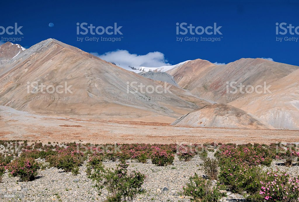 Pangong tso (Lake), Leh, Ladakh, Jammu and Kashmir, India stock photo