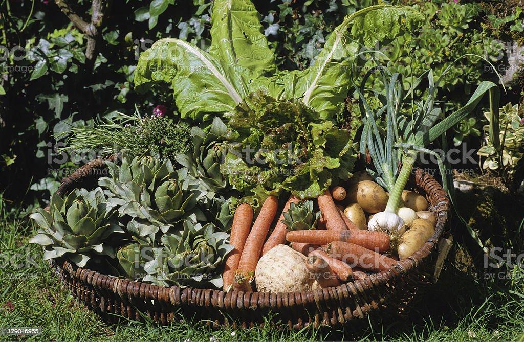 panier de légumes royalty-free stock photo