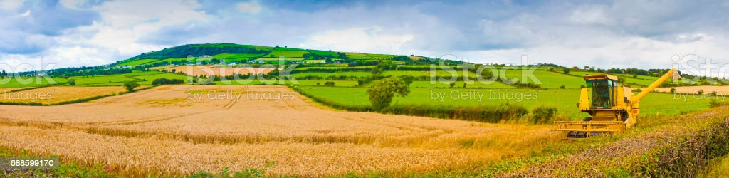 Paniramic Irish landscape with wheat field in the foreground and combine harvester (Ireland) stock photo