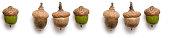 panorama oak acorn autumn