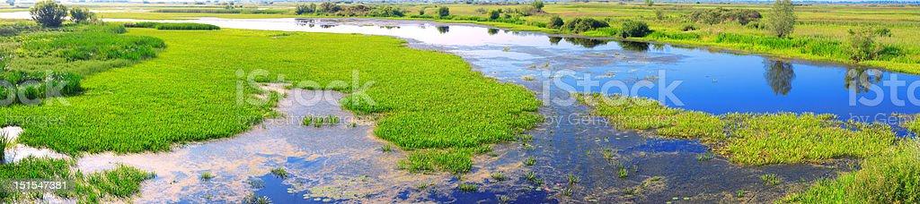 panorama of a marsh royalty-free stock photo