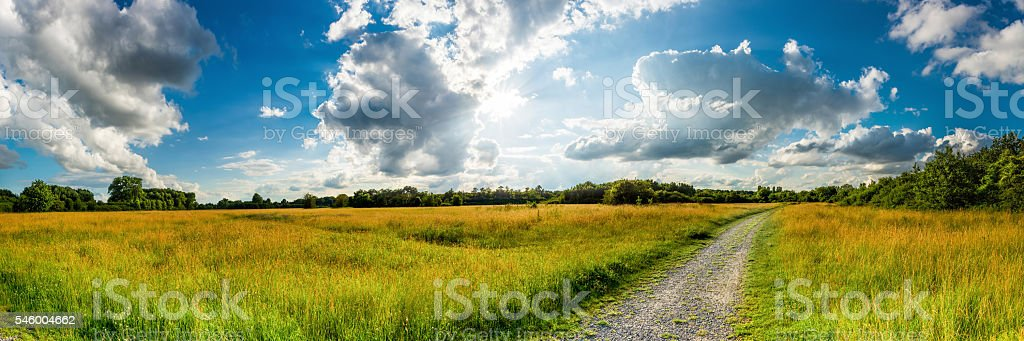 Panorama of a meadow surrounded by forest stock photo