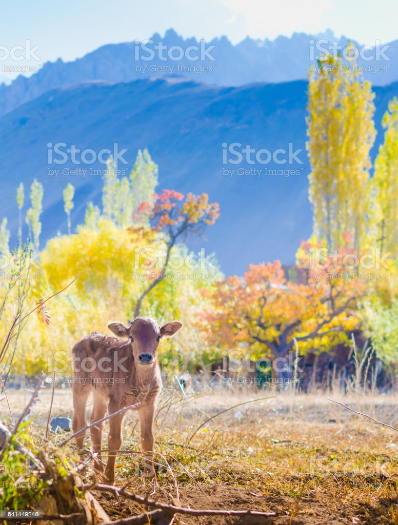 Panorama of a nature and landscape view in Leh ladakh india stock photo