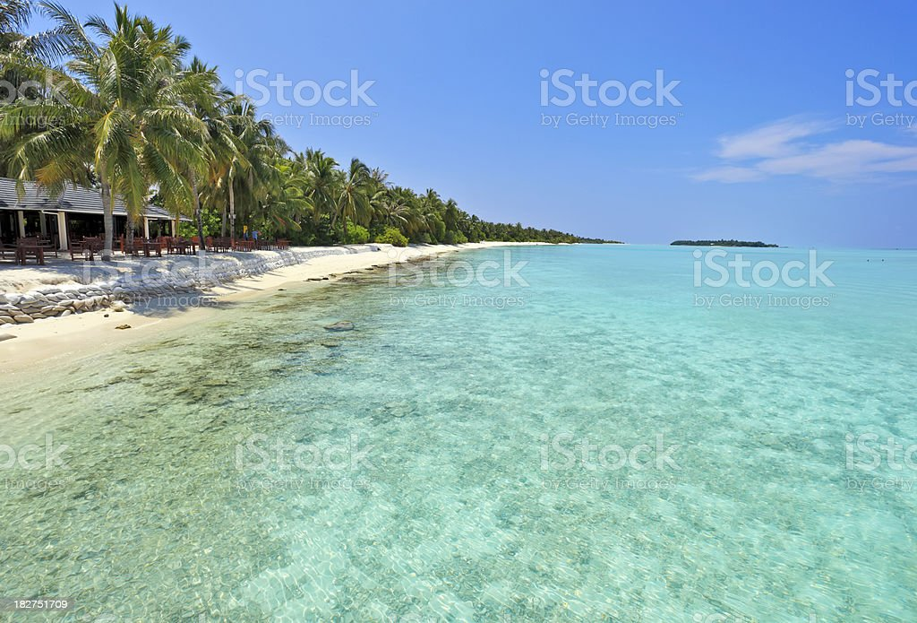 Panorama of a palm hanging over the beach. royalty-free stock photo