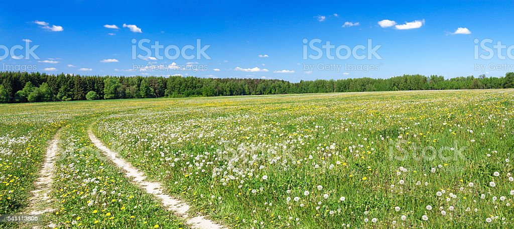 panorama of a summer landscape with the field stock photo