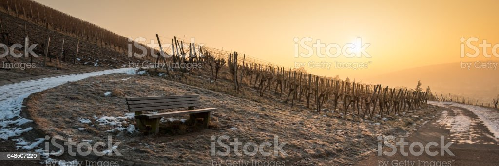 Panorama of a sunrise in a vineyard with bench stock photo