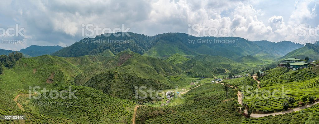 Panorama Of A Tea Plantation In The Cameron Highlands, Malaysia stock photo
