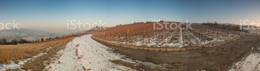 Panorama of a vineyard in winter with snow stock photo