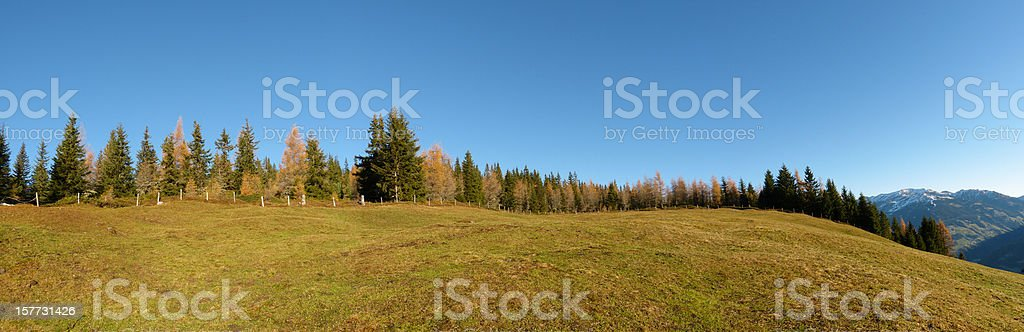 Panorama of an autumn forest stock photo