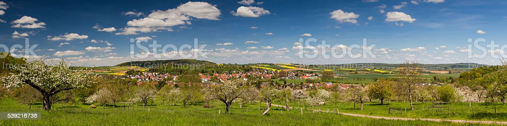 Panorama of apple tree blossom in spring stock photo