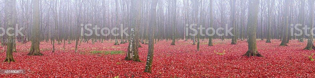 Panorama de la Forêt d'automne photo libre de droits