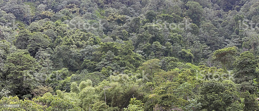 Panorama of canopy of a tropical rainforest royalty-free stock photo