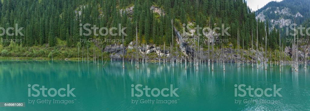 Panorama of dead trees in Lake Kaindy stock photo