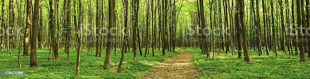 Panorama de la forêt de feuillus photo libre de droits