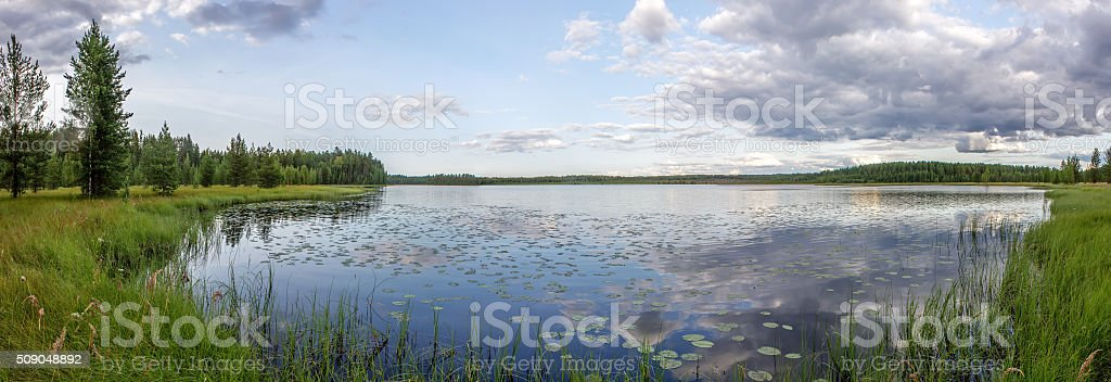 panorama of forest, lake and swamp stock photo