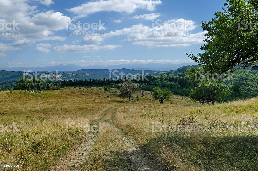 Panorama of glade and  green  forest in Vitosha mountain stock photo