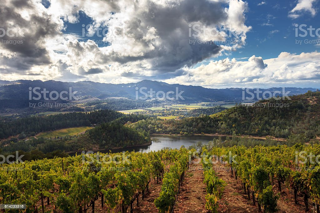Panorama of Howell Mountain, Napa Valley wine country in autumn stock photo