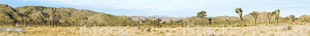 Panorama of Joshua Tree National Monument. stock photo