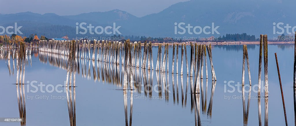 Panorama of pilings in river. stock photo