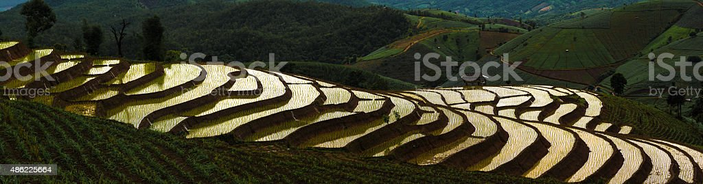 Panorama of rice fields on terraced stock photo