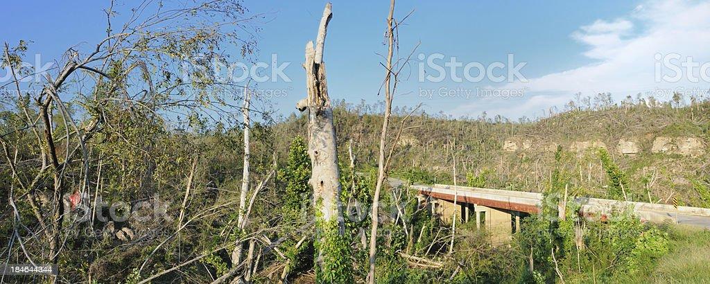 Panorama of scenic tornado damage royalty-free stock photo