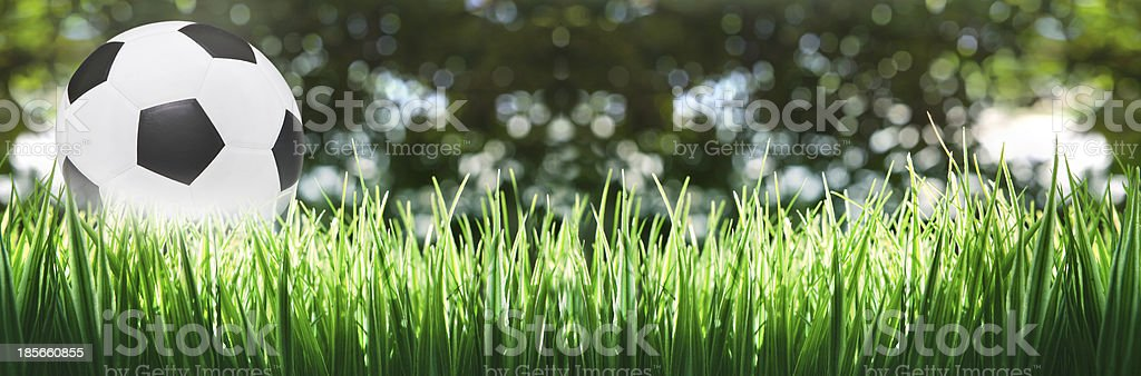panorama of soccer football on green grass stock photo