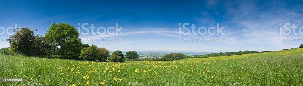 Panorama of spacious open pasture royalty-free stock photo