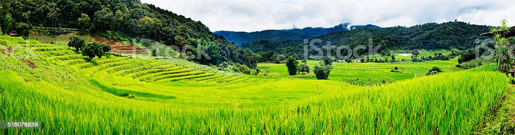 Panorama of Terraced Rice Field, Thailand stock photo