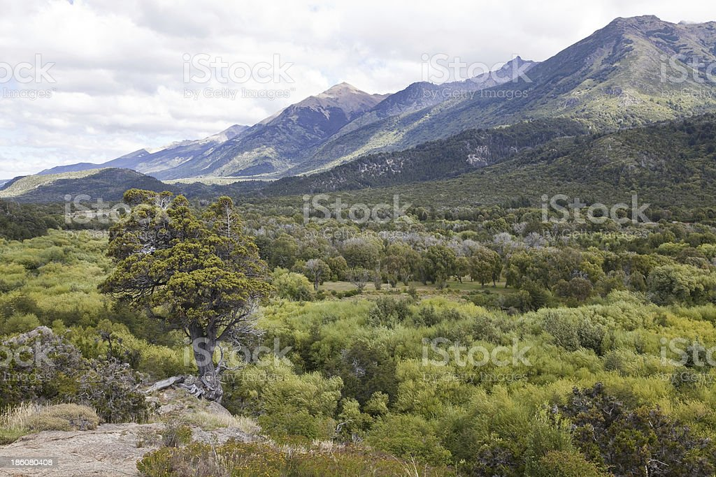 Panorama of the Alerces national park. stock photo