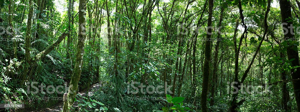 Panorama of the Cloud forest in Costa Rica stock photo